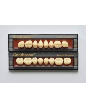 1 x 8 Gnathostar - Upper Posterior - Mould D80, Shade A2